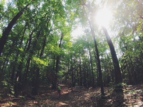 Kostnadsfri bild av äventyr, person, skog, träd