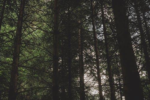 Immagine gratuita di abbaiare, alba, alberi, ambiente