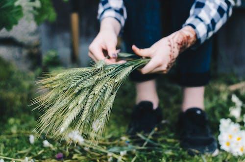 Kostnadsfri bild av beskära, bondgård, flingor, fotografering