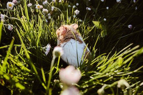 Kostnadsfri bild av äventyrlig, gräs, hamster, majestätisk