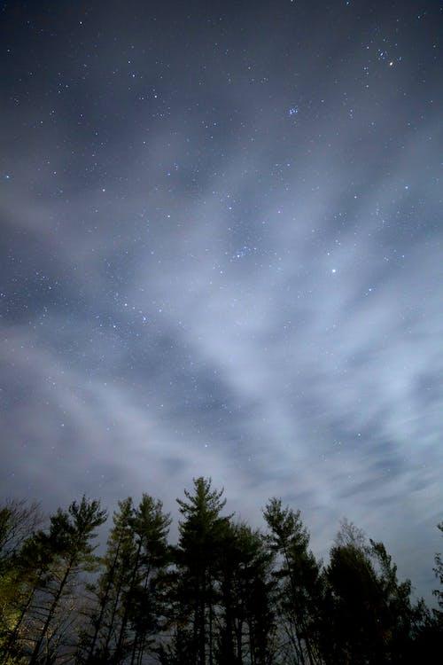 Foto profissional grátis de árvores, céu, estrelas, floresta
