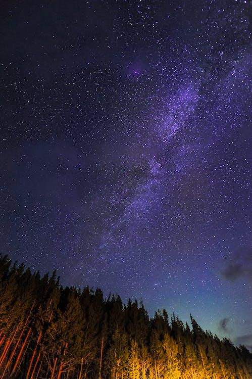 bầu trời, bầu trời đầy sao, cây