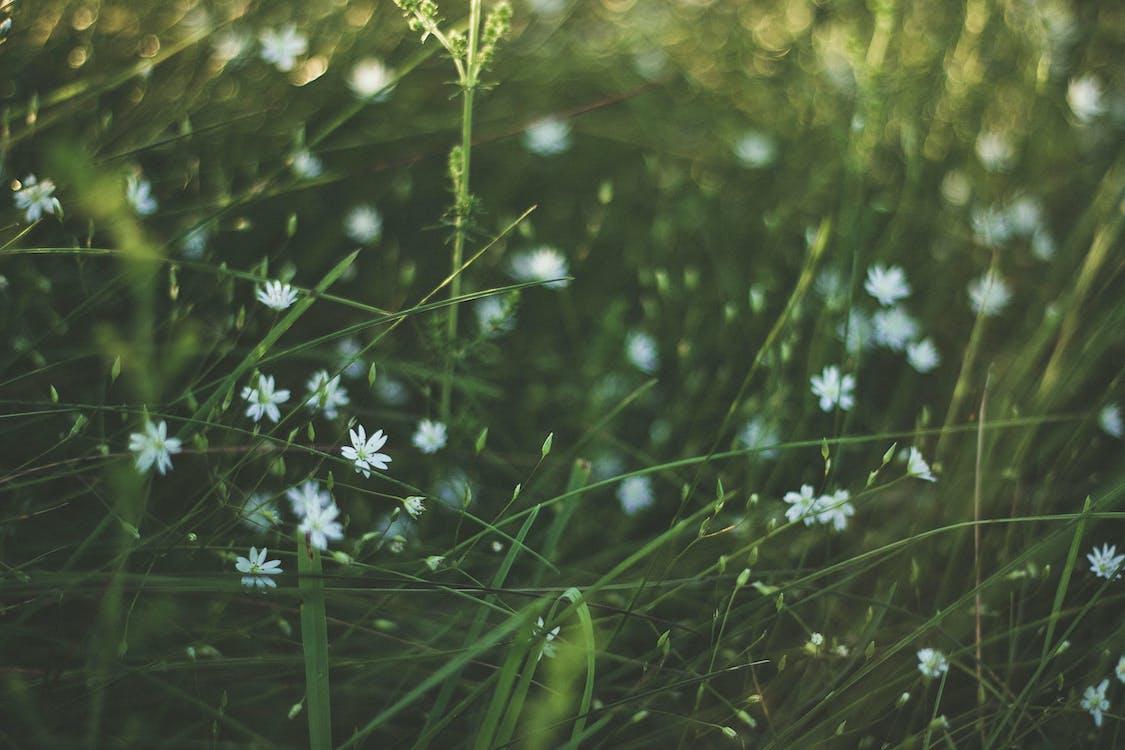 fű, homály, homályosít
