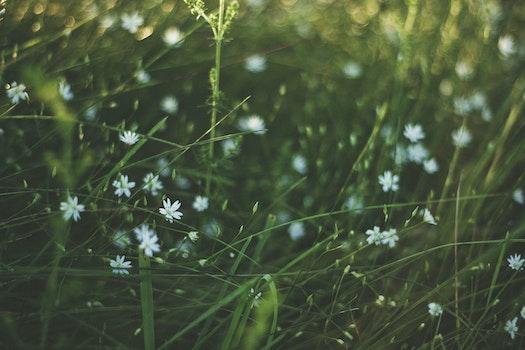 Free stock photo of landscape, field, flowers, grass
