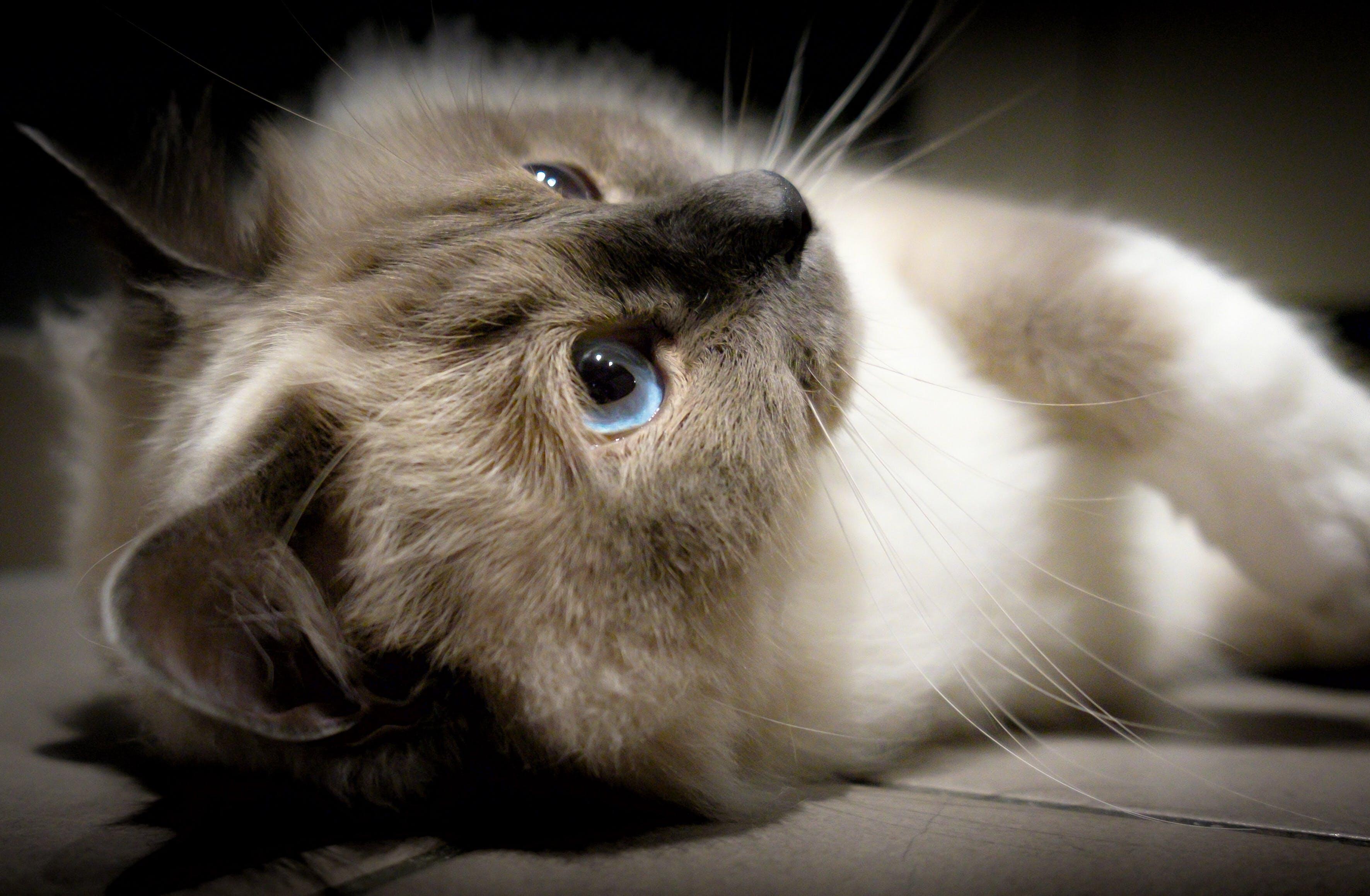 Foto profissional grátis de animais fofinhos, animal, animal doméstico, azul