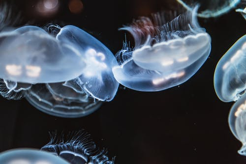 Close-up Photo of Jellyfishes