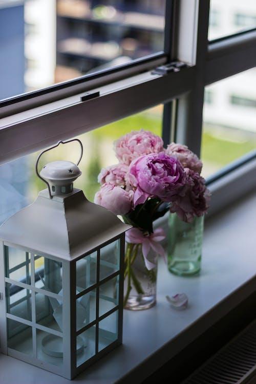 Foto d'estoc gratuïta de fanalet, flors, gerro, got