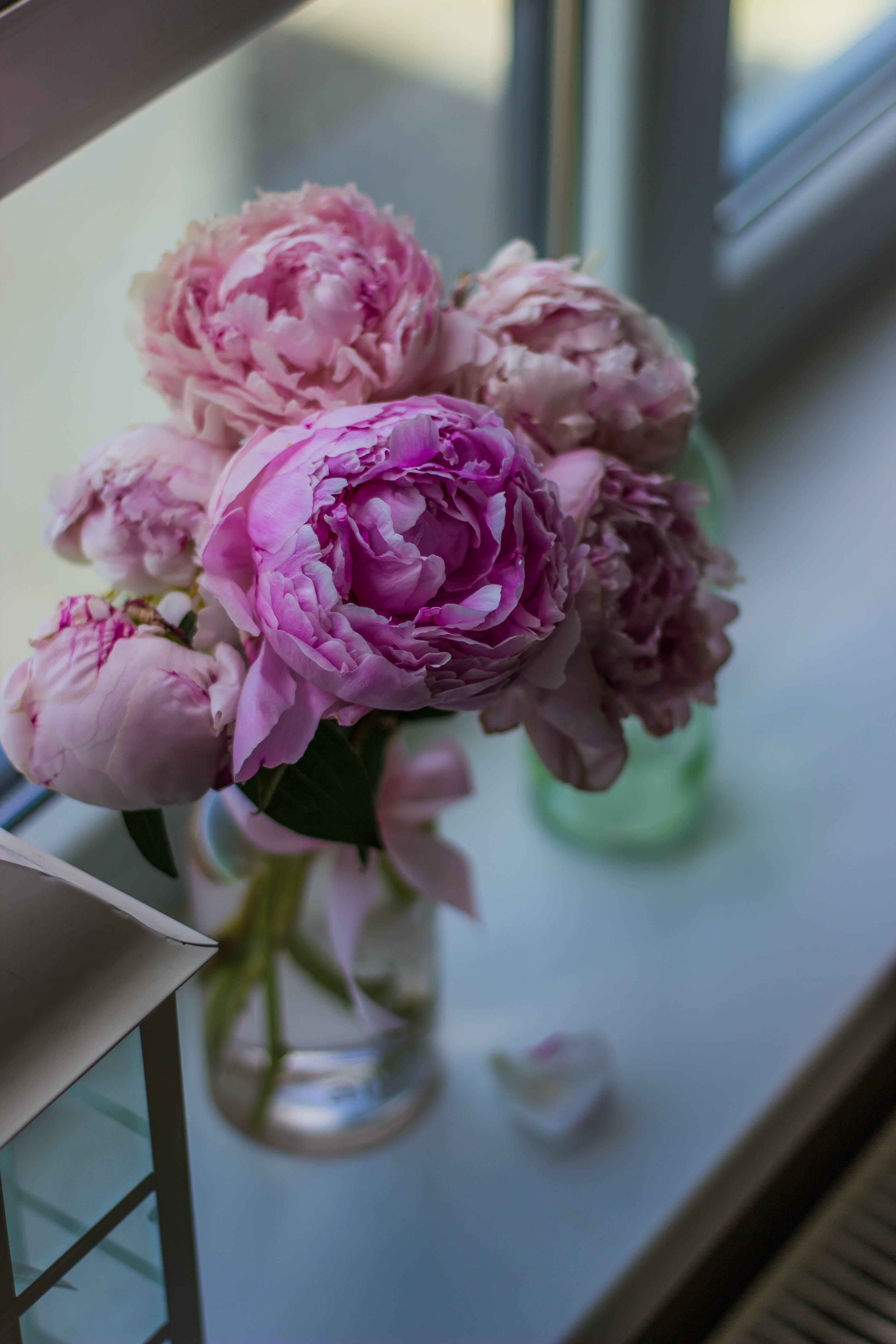 Pink Peony Flowers in Bloom in Clear Glass Vase Beside Glass Window
