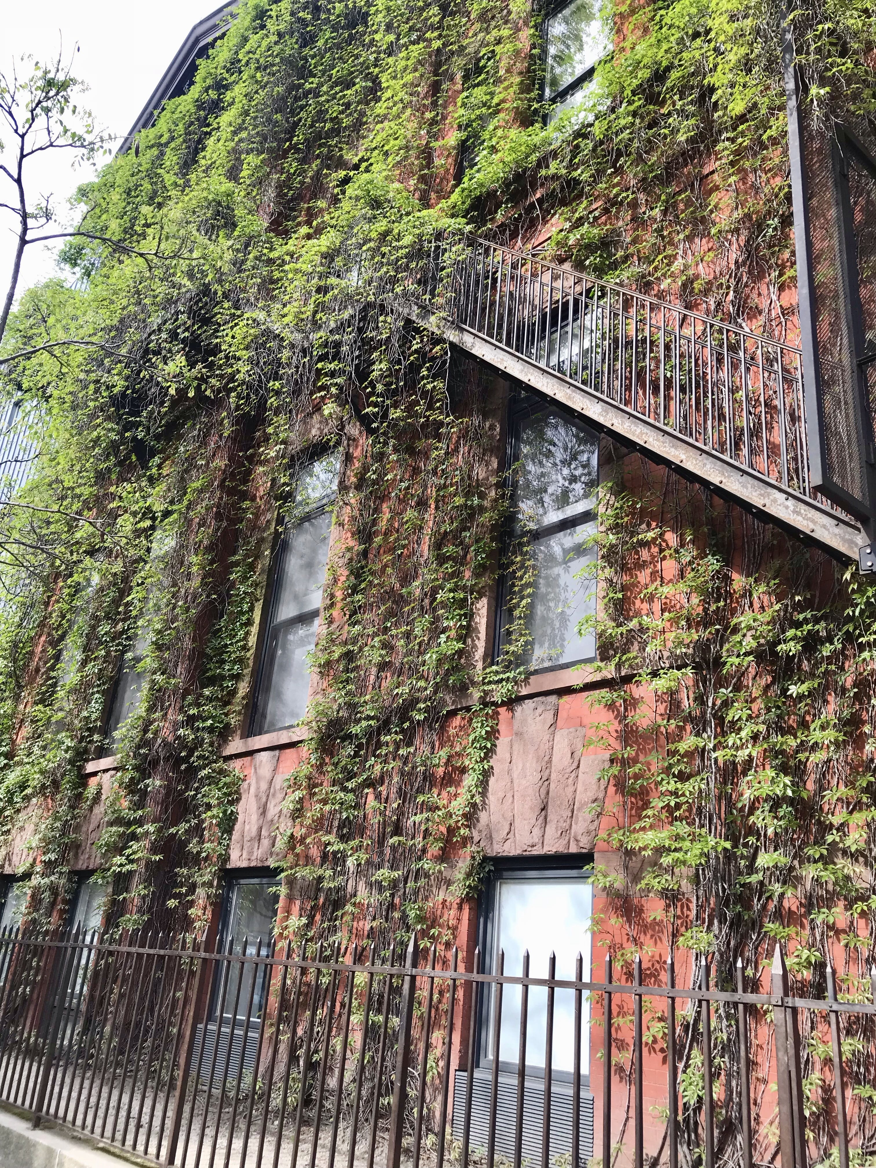 Free stock photo of apartment building, brooklyn, building, vine