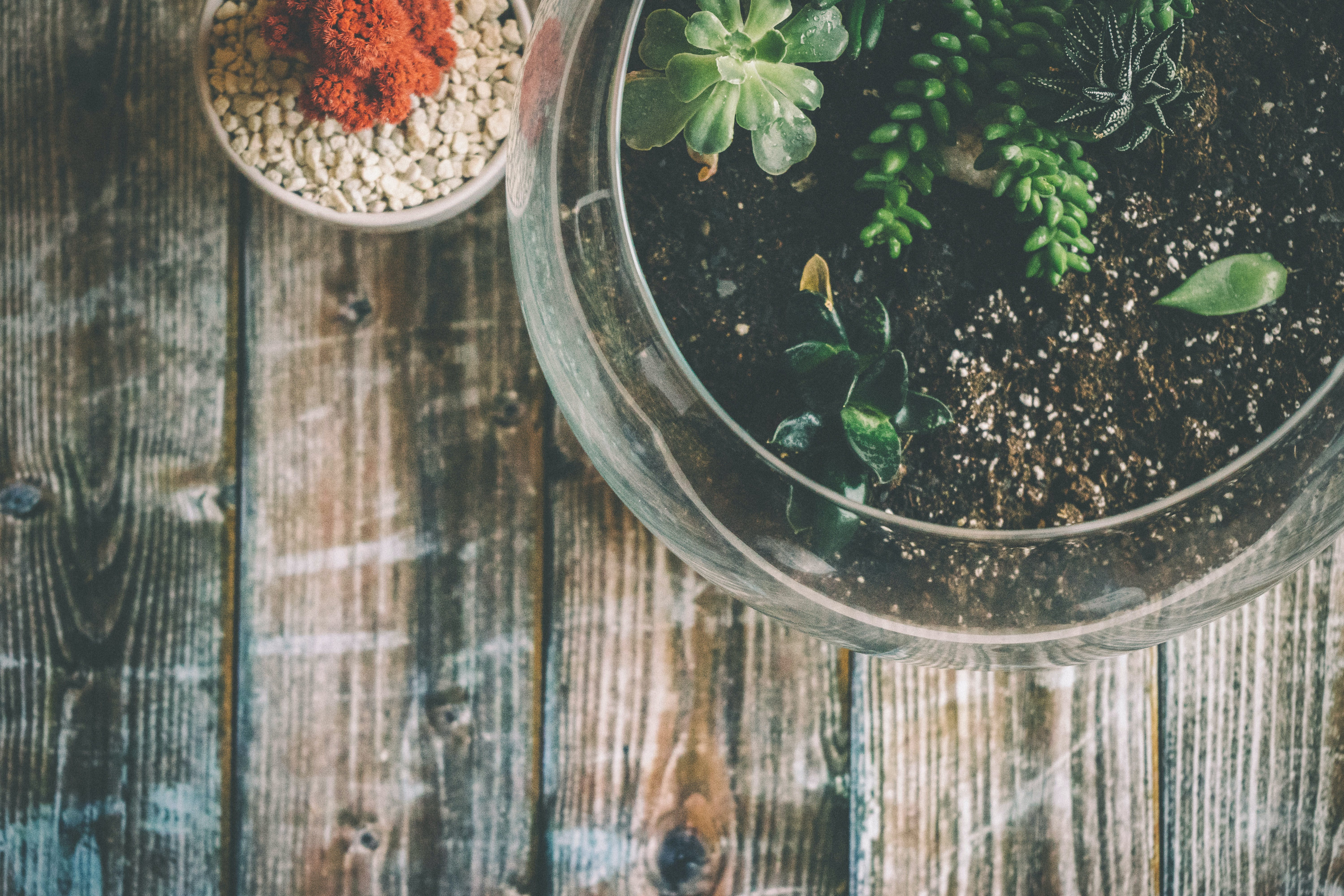 Aerial Photography of Green Potted Plant