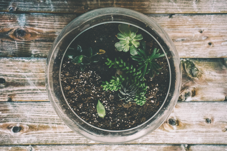 buy large succulents online