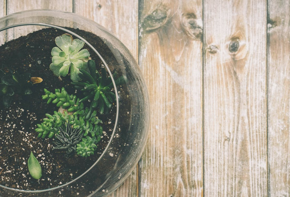 Green Succulent Plant on Clear Glass Jar on Top of Brown Wooden Surface
