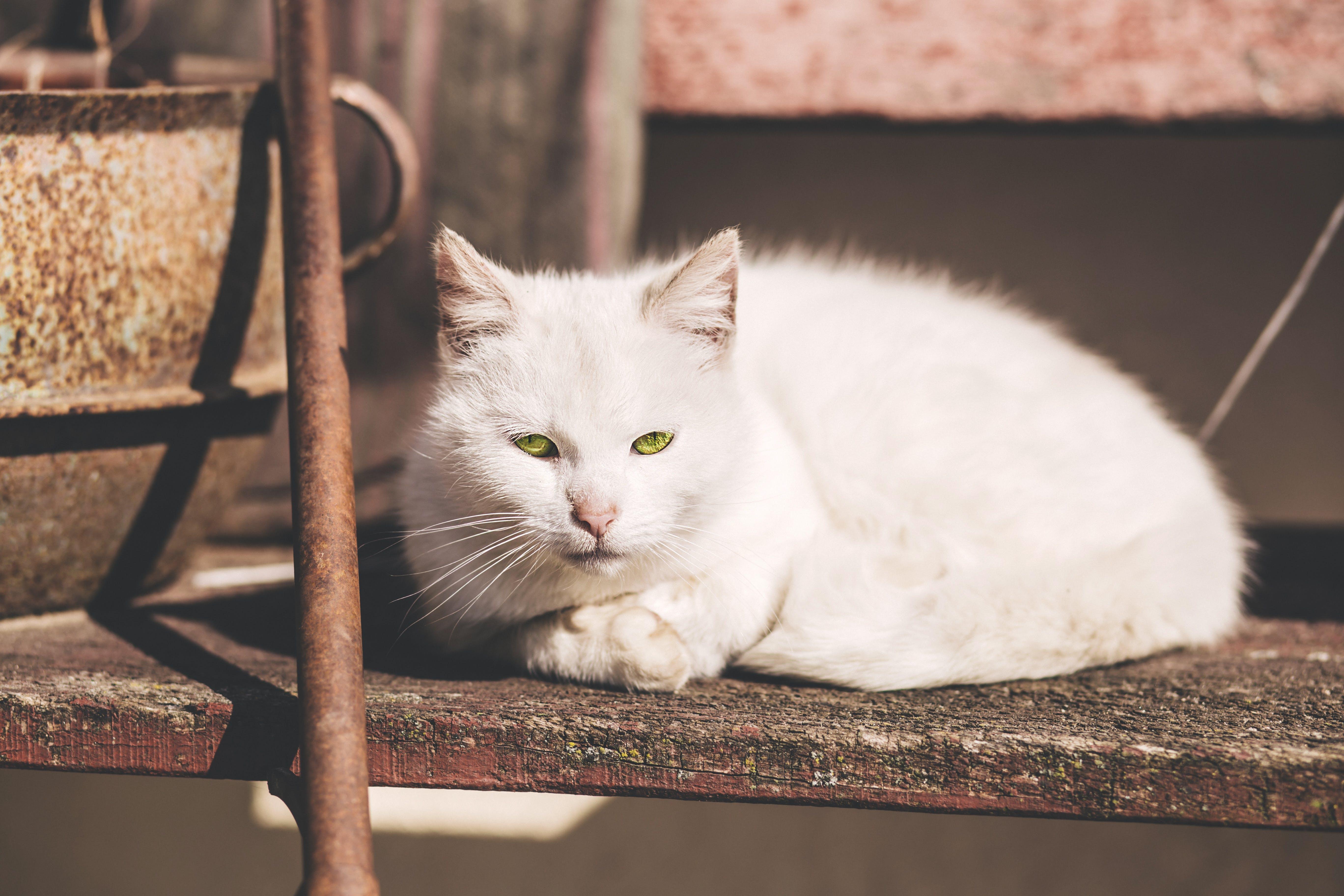 White Short Fur Cat Near Brown Metal Rod