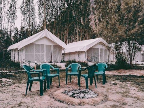 Безкоштовне стокове фото на тему «відпустка, дерева, зелений, Кемпінг»