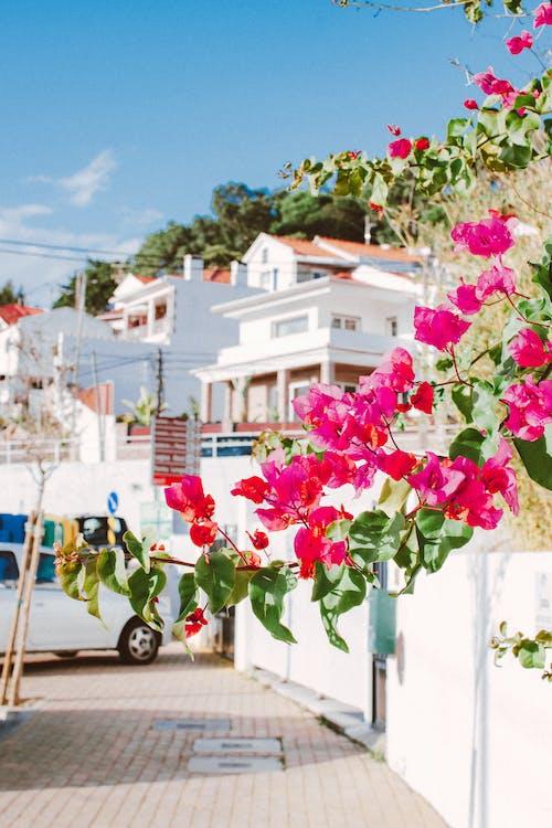 Gratis lagerfoto af arkitektur, blade, blomster, blomstrende