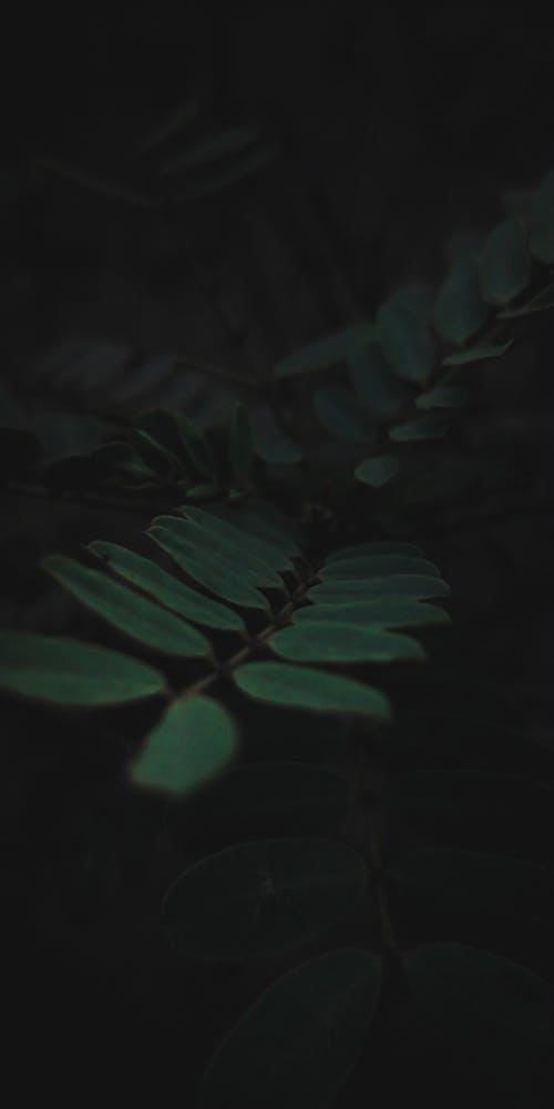 bitkiler, cep telefonu duvar kağıdı, duvar kağıdı, gezegen içeren Ücretsiz stok fotoğraf