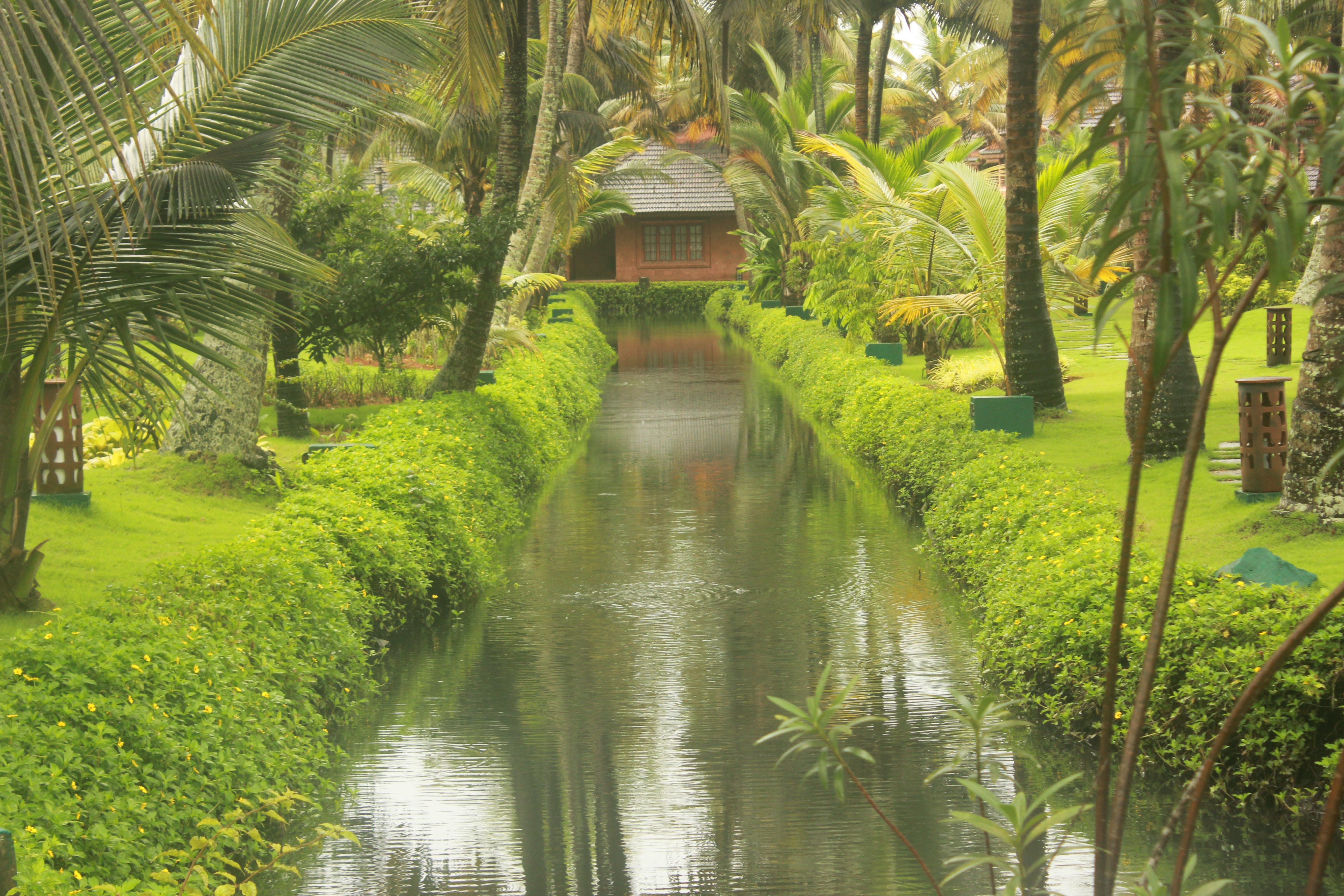 Free stock photo of green, resort, stream, trees