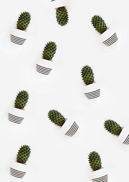 Piante Di Cactus Su Vasi Per Piante