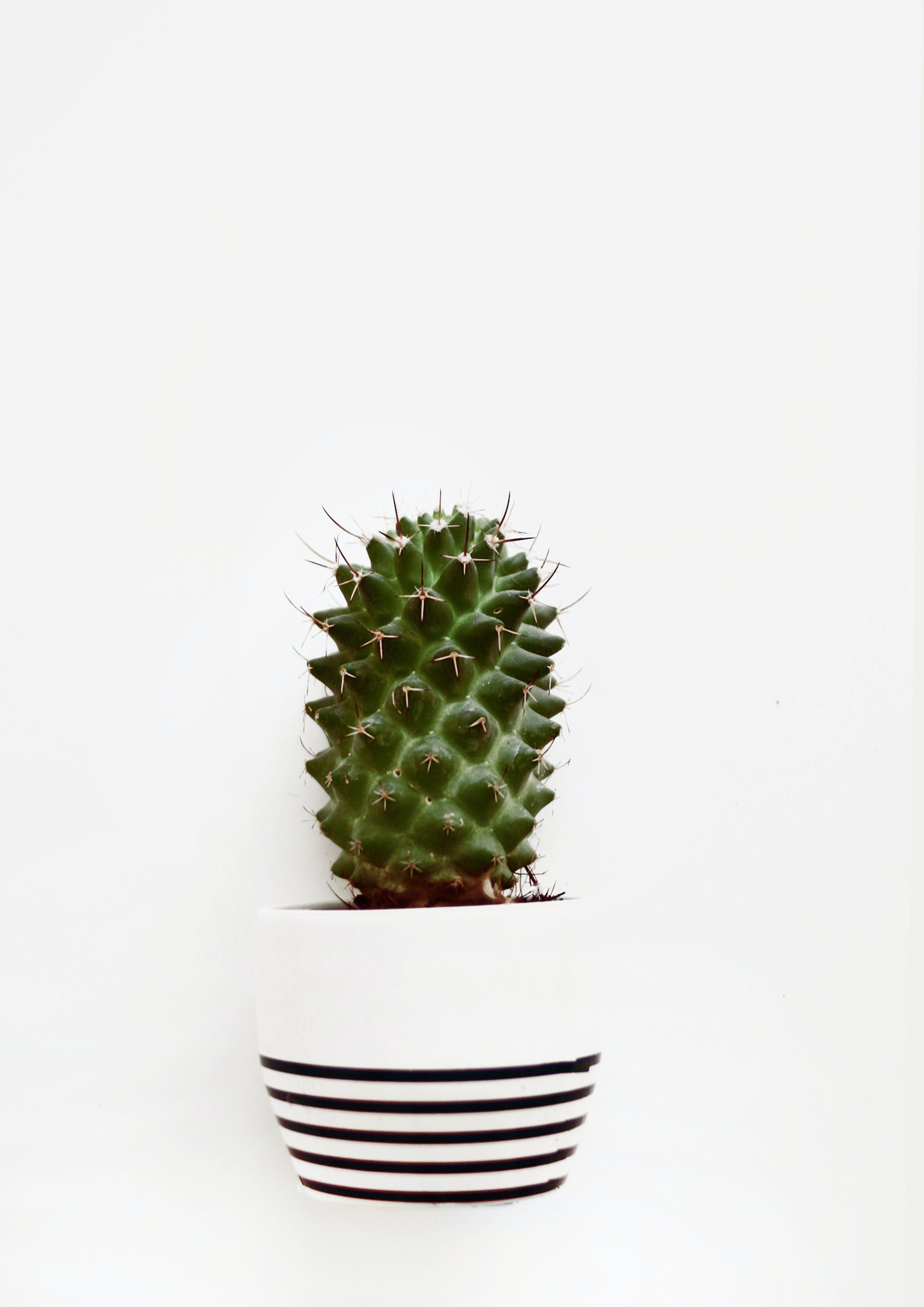 Close-Up Photo of Cactus On Pot