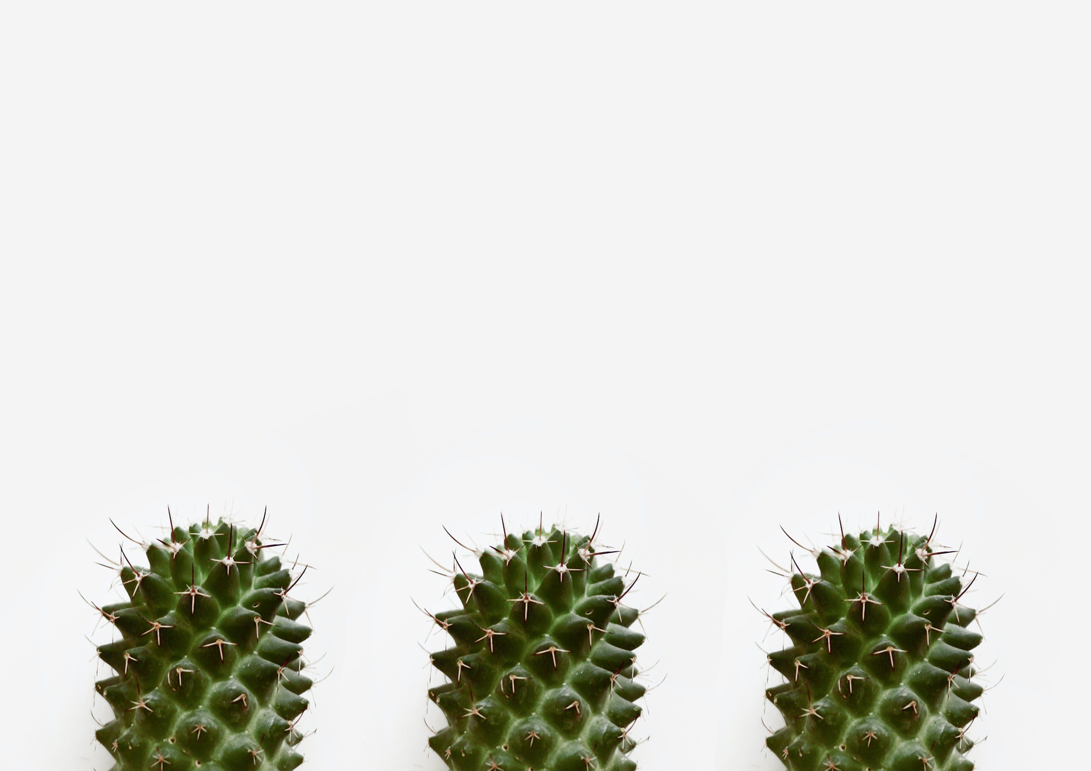 仙人掌, 刺, 室內植物, 尖刺 的