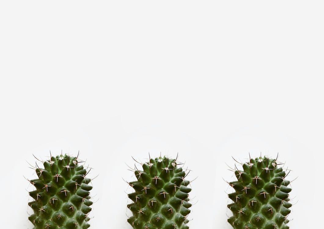cactus, doornen, fabrieken