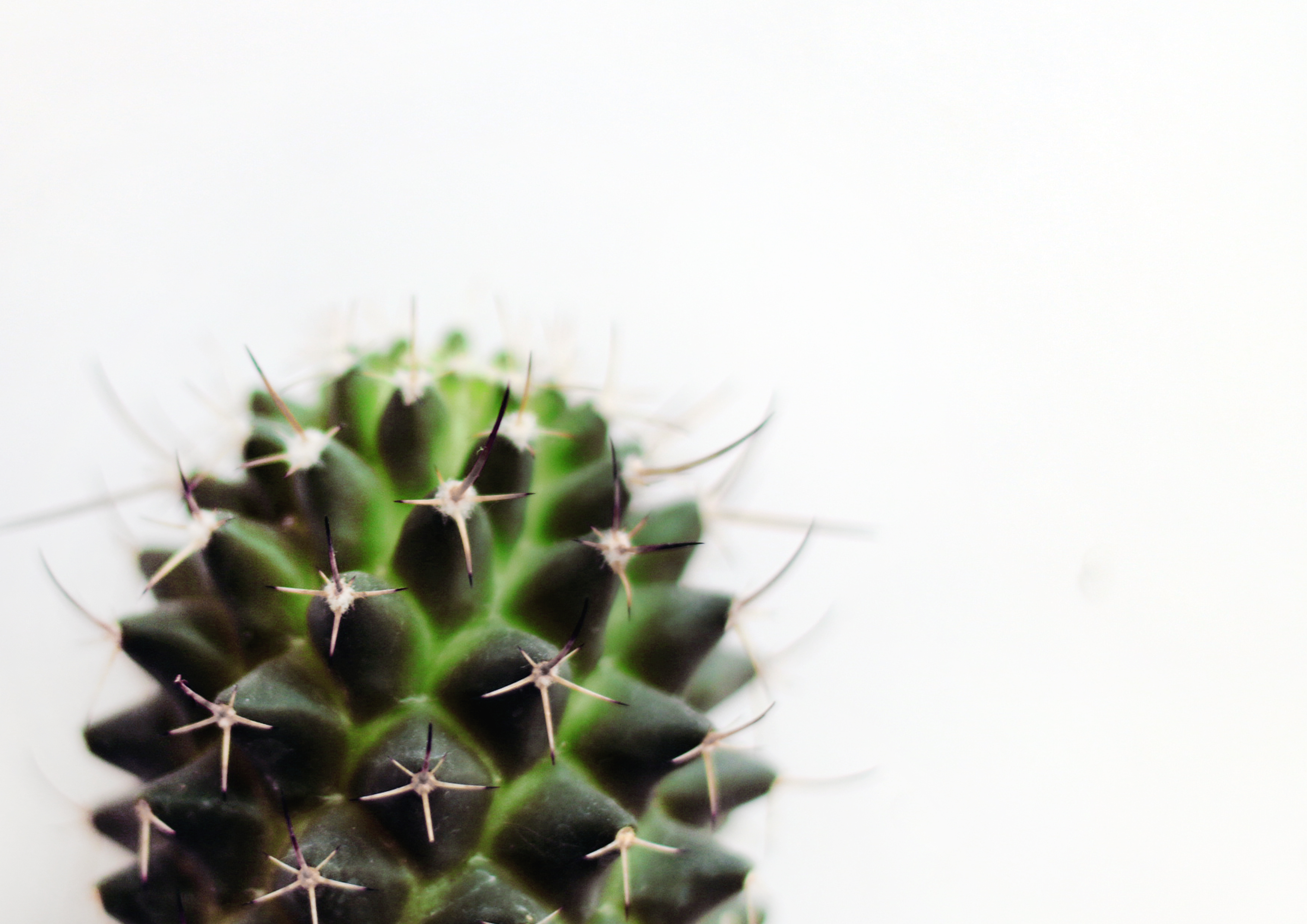 types of succulents with pictures