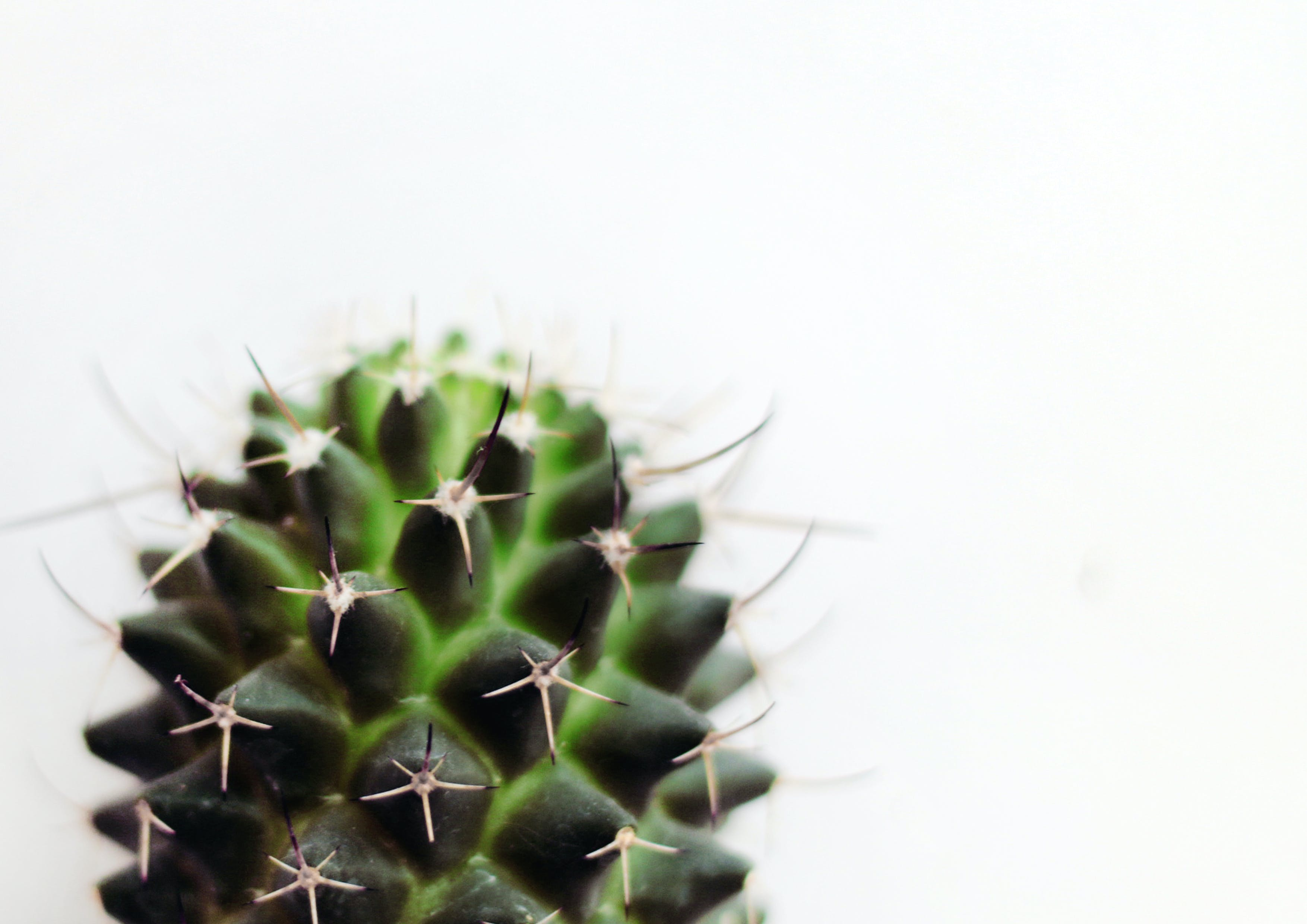 Micro Photography of Green Cactus Plant