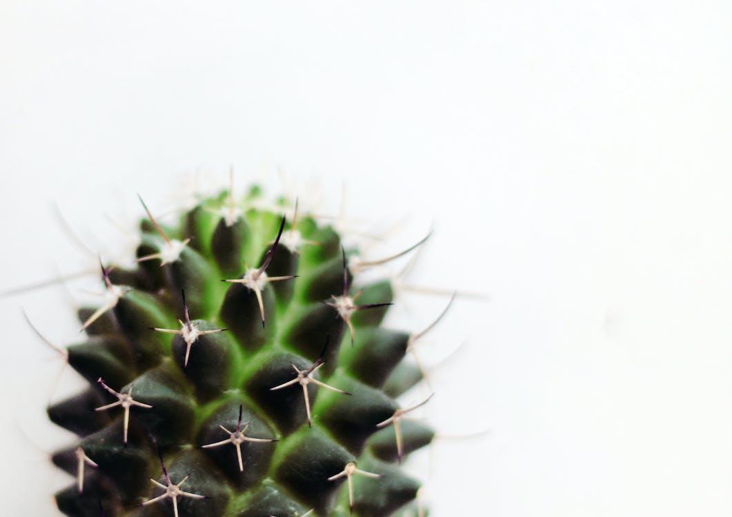 Gratis lagerfoto af adskilt, botanisk, close-up