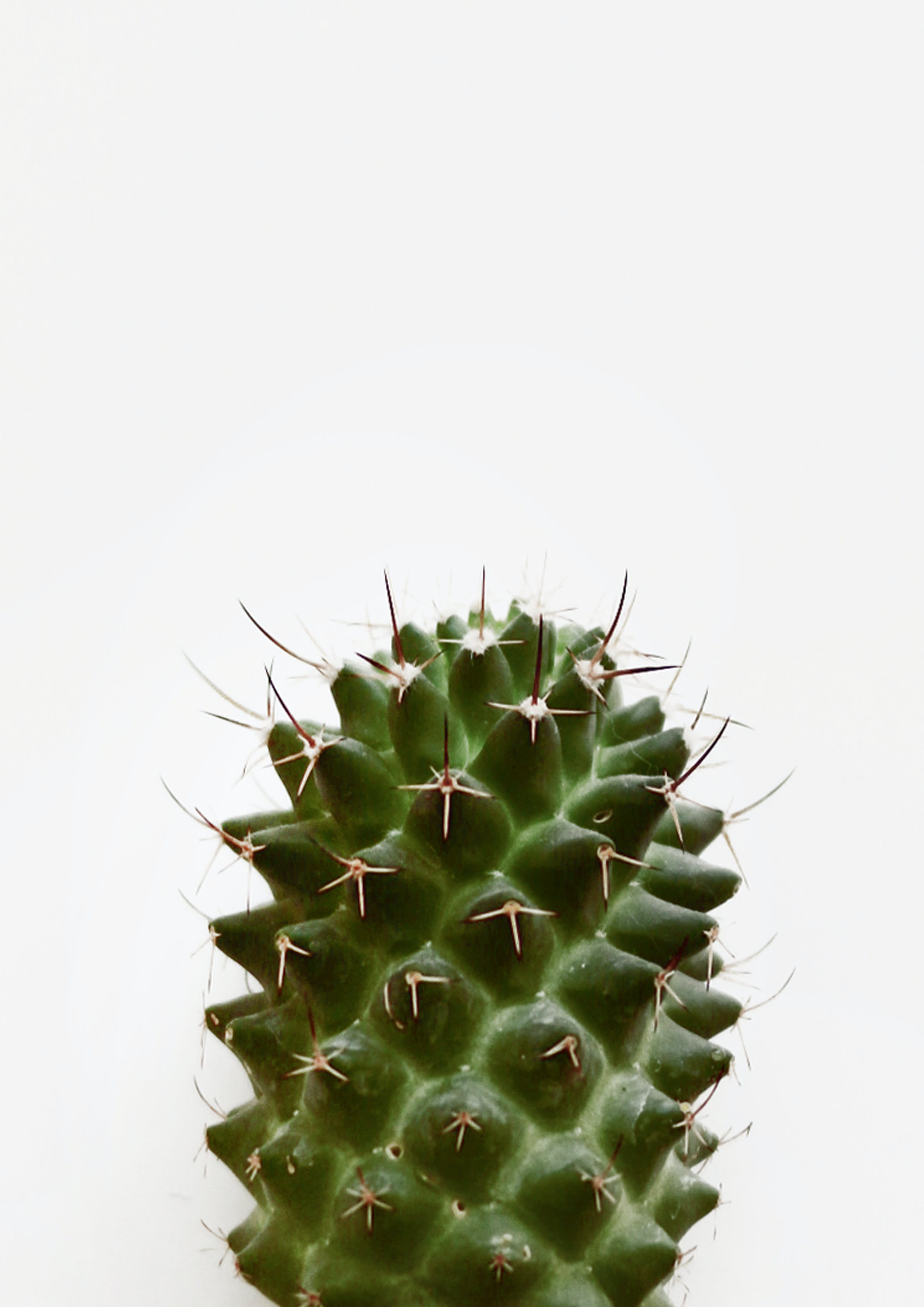 仙人掌, 刺, 室內植物, 尖刺 的 免費圖庫相片