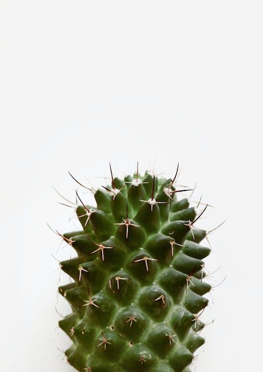ciernie, igły, kaktus