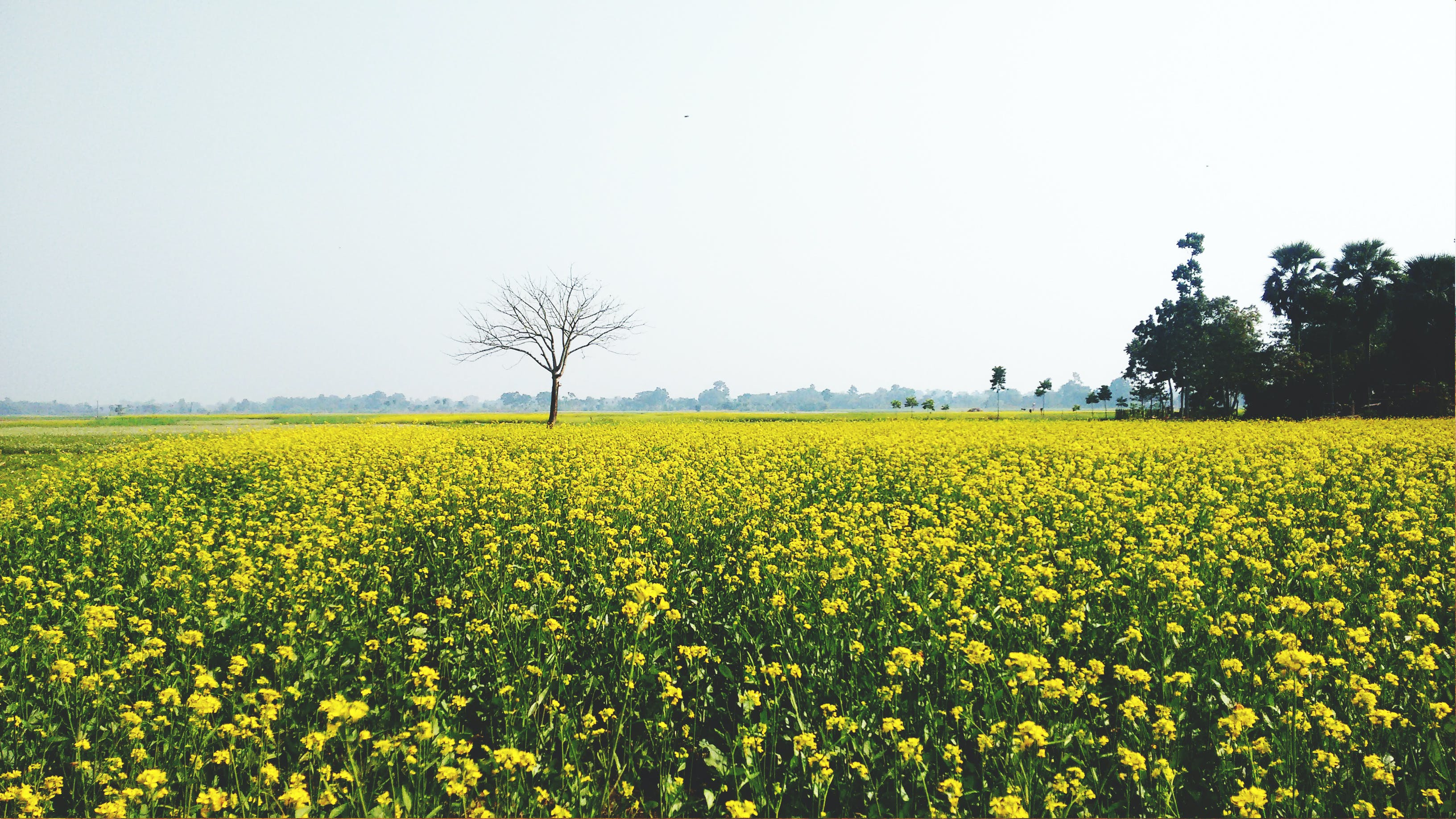 Green and Yellow Flower Field
