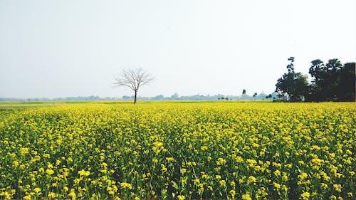 Kostnadsfri bild av åkermark, blommor, blomsteräng, bondgård
