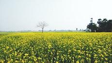 sky, field, flowers