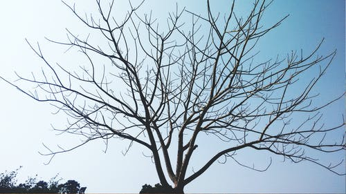 ağaç, arka fon, bir başına, fedoragraphic içeren Ücretsiz stok fotoğraf