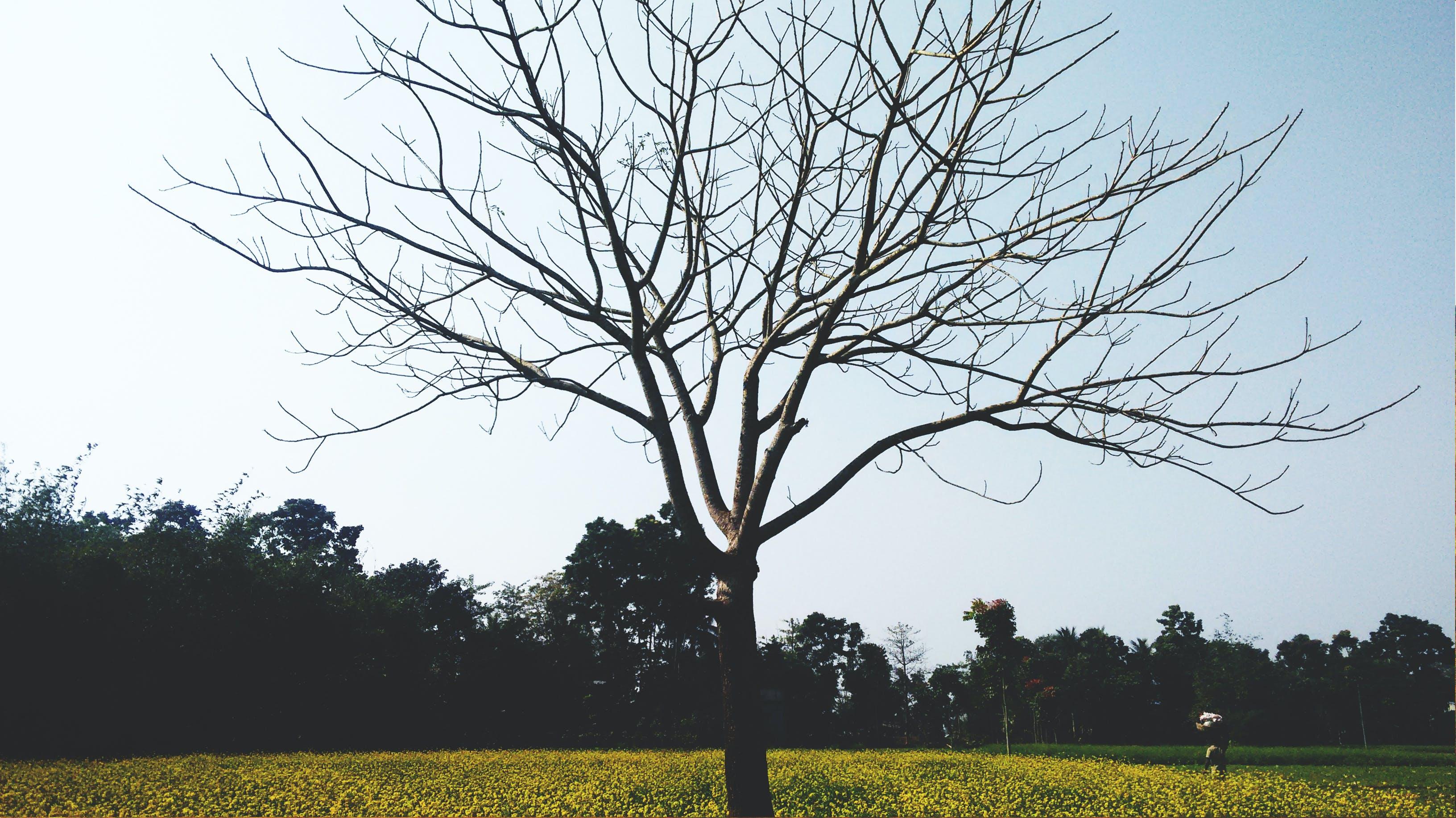 Free stock photo of background, black, blue sky, fedoragraphic