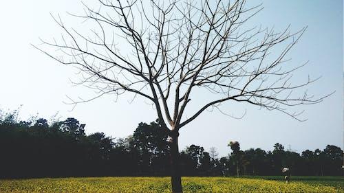 คลังภาพถ่ายฟรี ของ fedoragraphic, saurav, ดำ, ต้นไม้เหงา