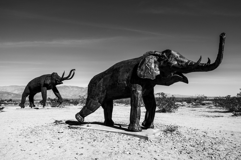 Free stock photo of Anza Borrego, black and white, desert, elephant