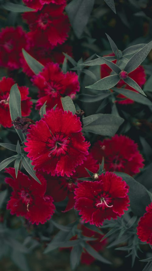 Free stock photo of 4k wallpaper, beautiful flower, beauty in nature, colorful wallpaper