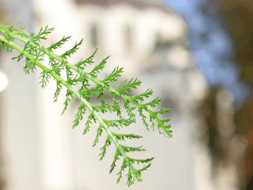 Fotobanka sbezplatnými fotkami na tému 3d papier vianočný strom, 3d strom, ako na záhradu, ako zlepšiť čitateľské zručnosti