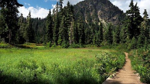 Foto d'estoc gratuïta de a l'aire lliure, arbres, boscos, brillant