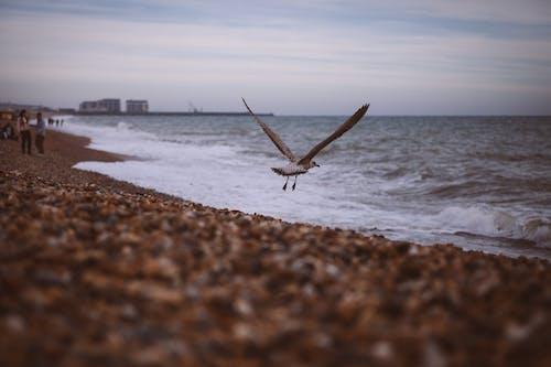 Безкоштовне стокове фото на тему «берег моря, вода, гальковий пляж, море»
