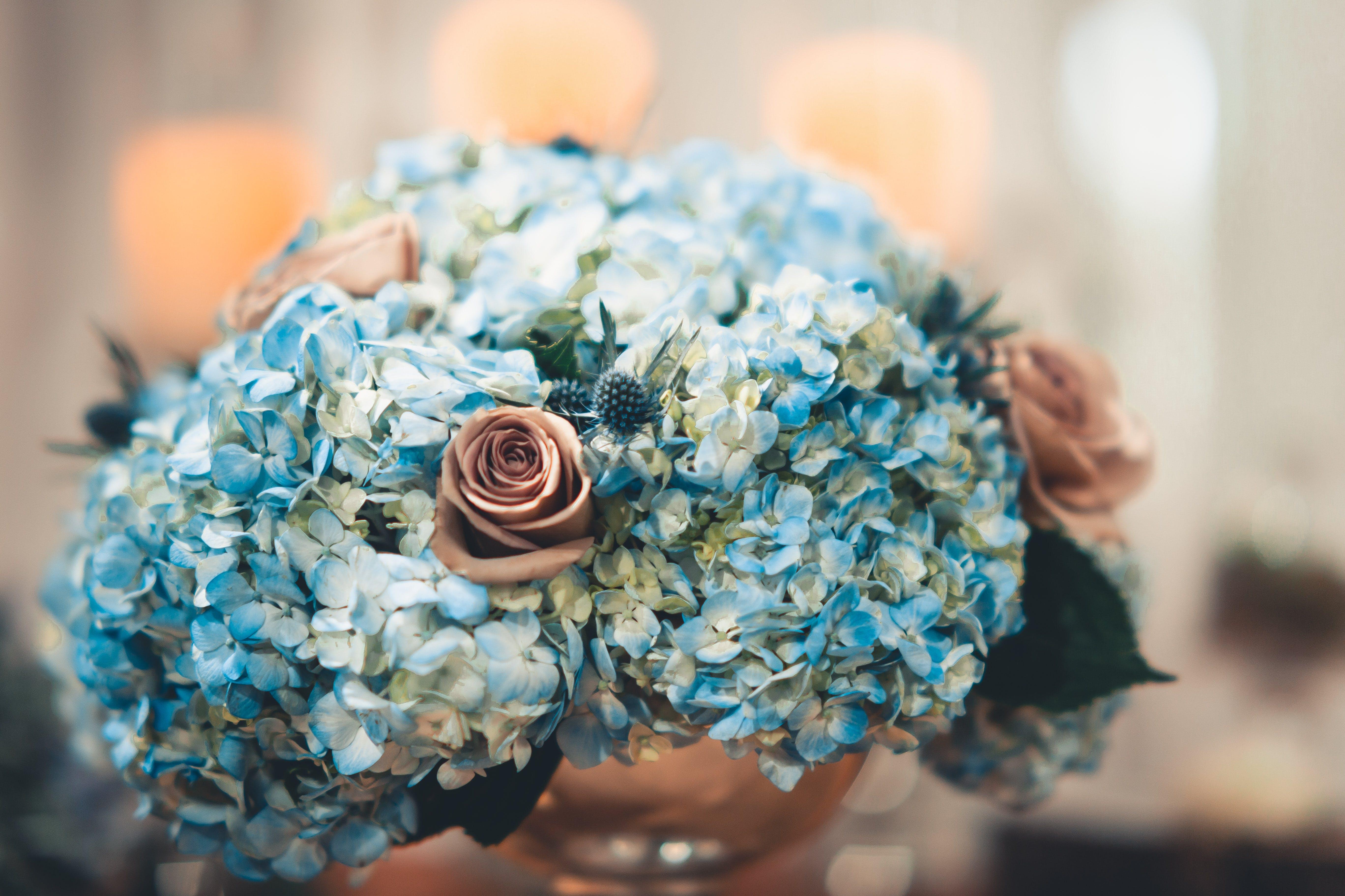 Free stock photo of arrangement, beautiful, bloom, blooming