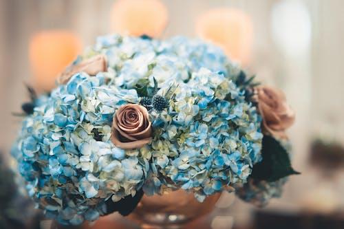 Δωρεάν στοκ φωτογραφιών με αγάπη, άνθη πορτοκαλιάς, ανθίζω, ανθισμένος