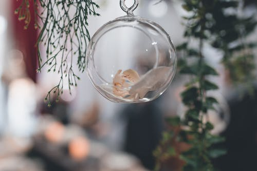 Clear Round Ball Hanging from Plant Branch