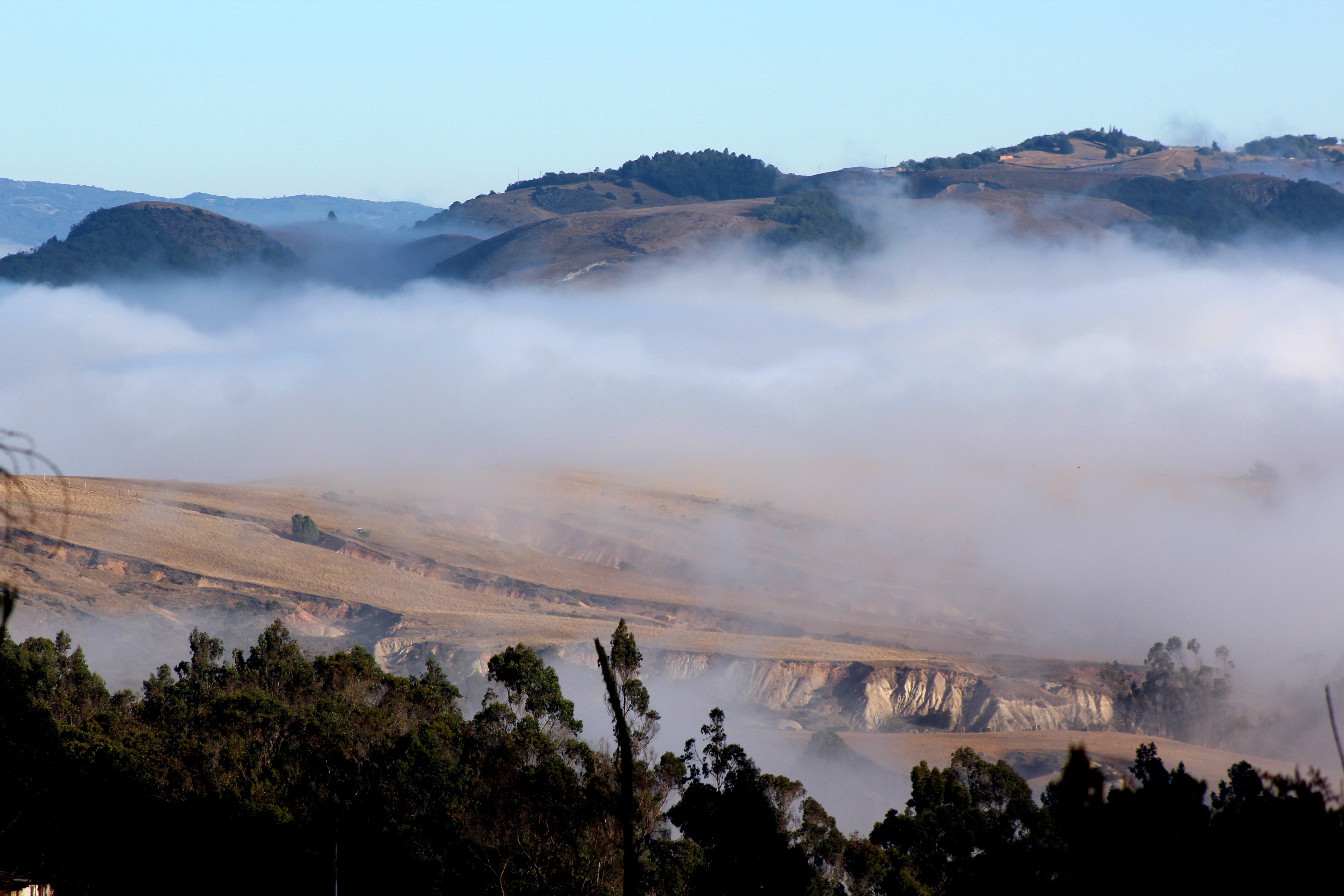 Free stock photo of foggy morning, landscape
