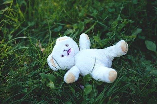 Ảnh lưu trữ miễn phí về cánh đồng, cỏ, dễ thương, đồ chơi