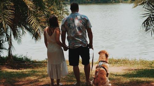 Fotos de stock gratuitas de animal, canino, cogidos de la mano, gente