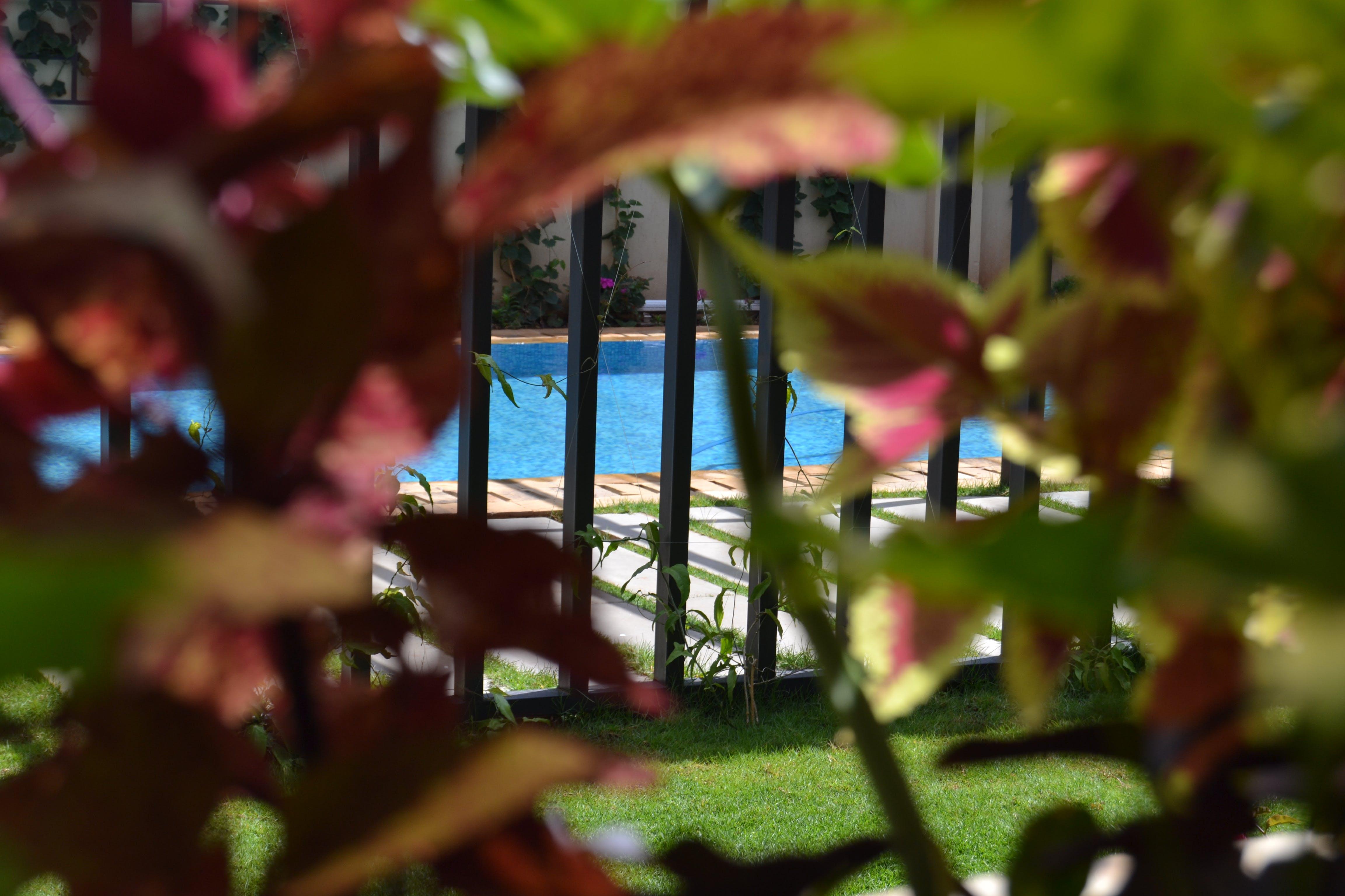 Free stock photo of poolside, beautiful flowers