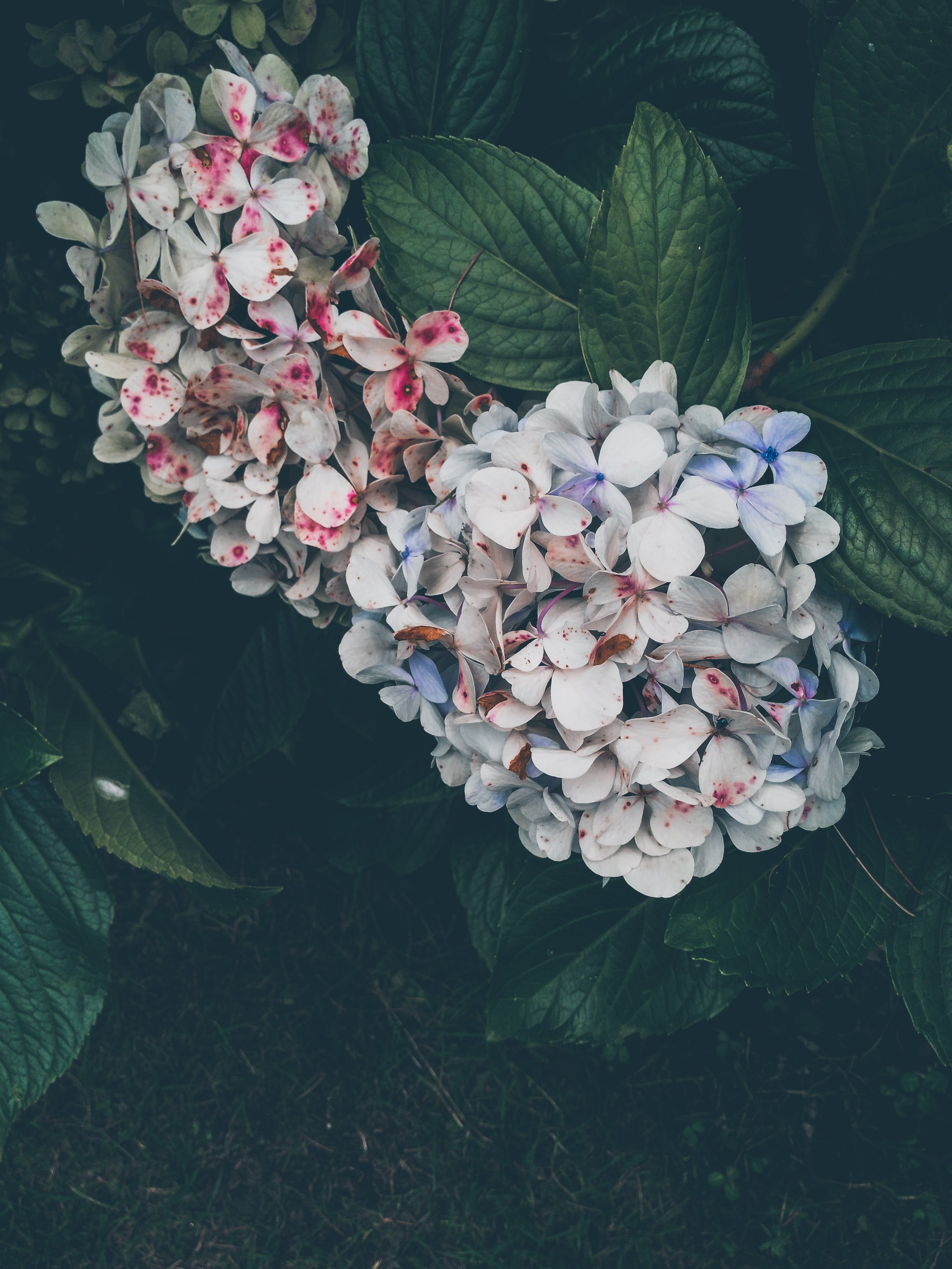 Free stock photo of 4k wallpaper, abstract photo, Adobe Photoshop, beautiful flower