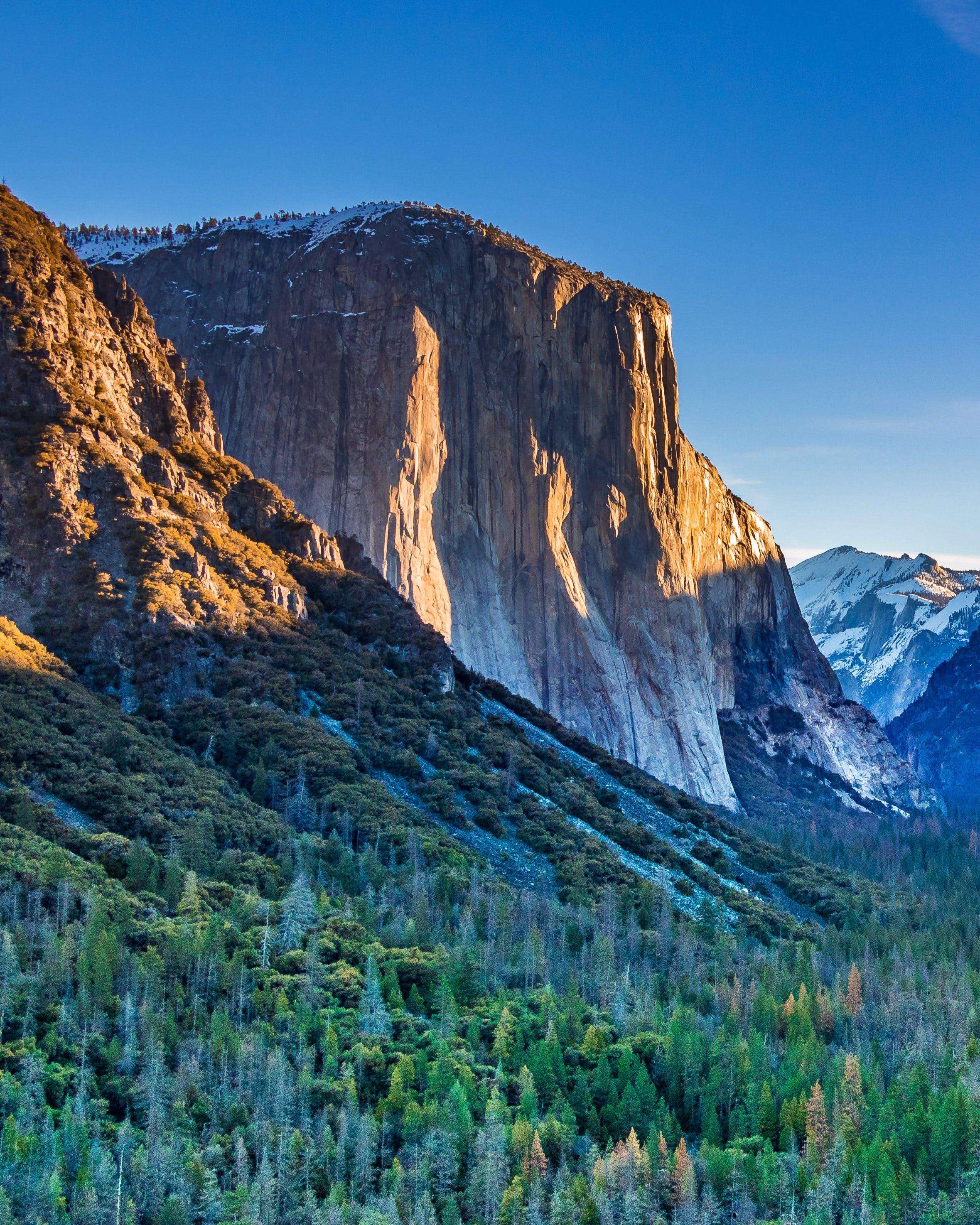 Free stock photo of blue, california, el capitan, forest